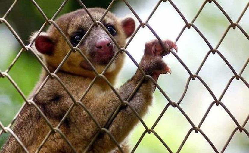 Desde 2002 Costa Rica prohibió la entrada a su país de circos con animales y aprobó una ley que hace ilegal la caza deportiva. (Agencias)