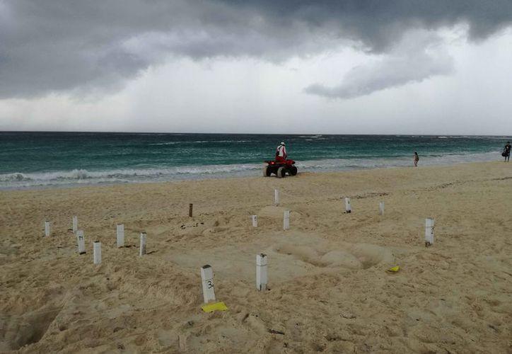 Organizaciones ambientales protegen el Santuario de la Tortuga Marina. (Adrián Barreto/SIPSE)