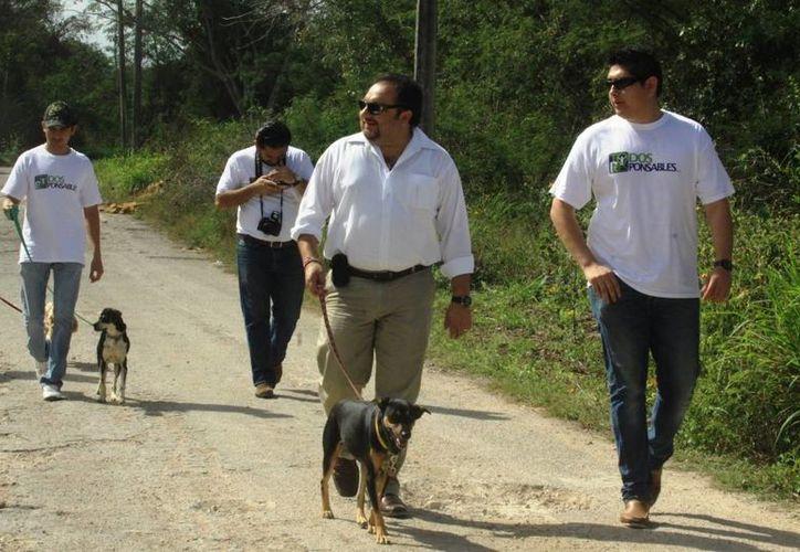 El diputado Francisco Torres Rivas promueve la esterilización de perros y gatos, a fin de acabar con las matanzas de animales callejeros. (SIPSE)