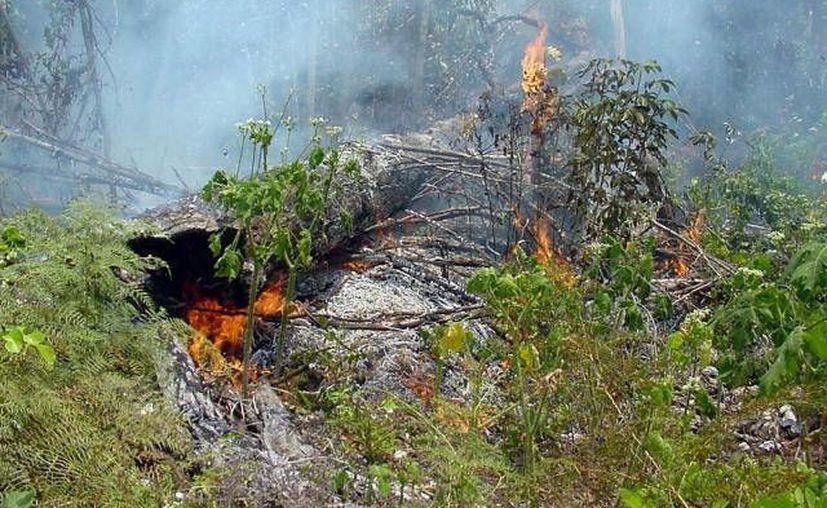 Se cree que el fuego tuvo su origen en las cercanías del poblado Luis Echeverría, en Othón P. Blanco. (Redacción/SIPSE)