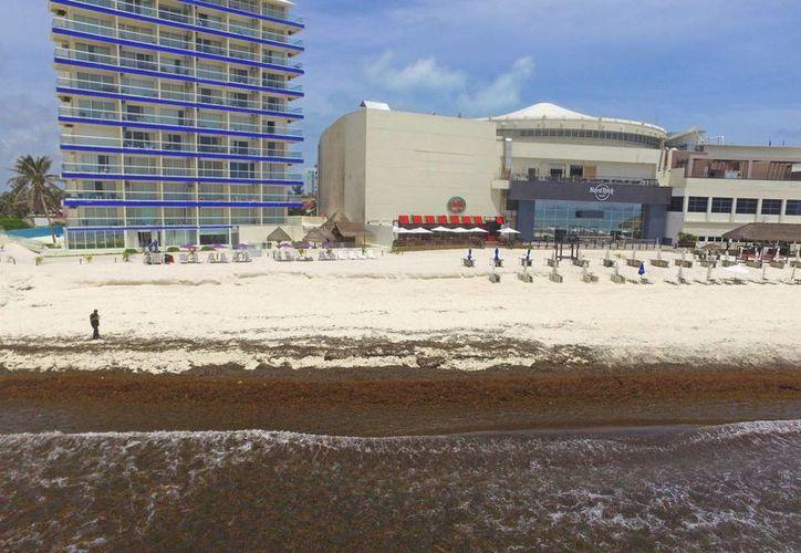 Llegan a las playas pasto marino, basura, restos de embarcaciones, latas y pet. (Jesús Tijerina/SIPSE)