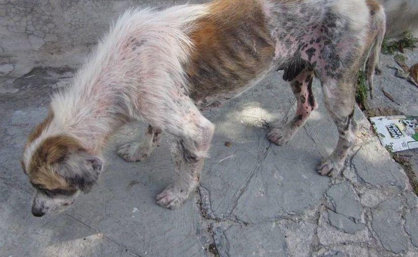 El 87% de los asesinos seriales, tienen antecedentes de maltrato hacia los animales. (Foto de Contexto/Internet)
