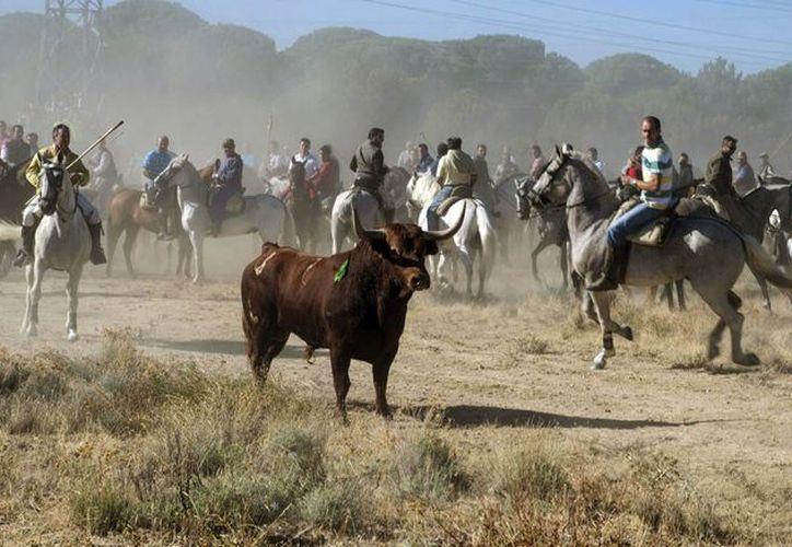El Toro de la Vega es una de las celebraciones más populares en el centro de España, pero a su vez cuenta con un importante número de detractores. (EFE)