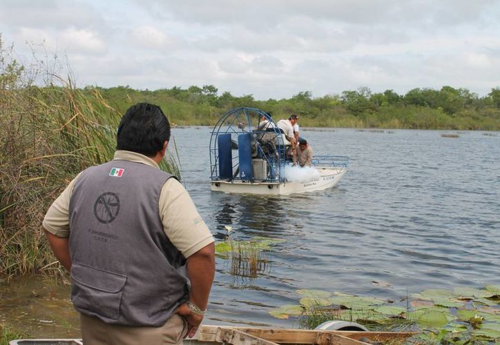 Autoridades pretenden eliminar criaderos de la ribera del Río Hondo. (Harold Alcocer/SIPSE)