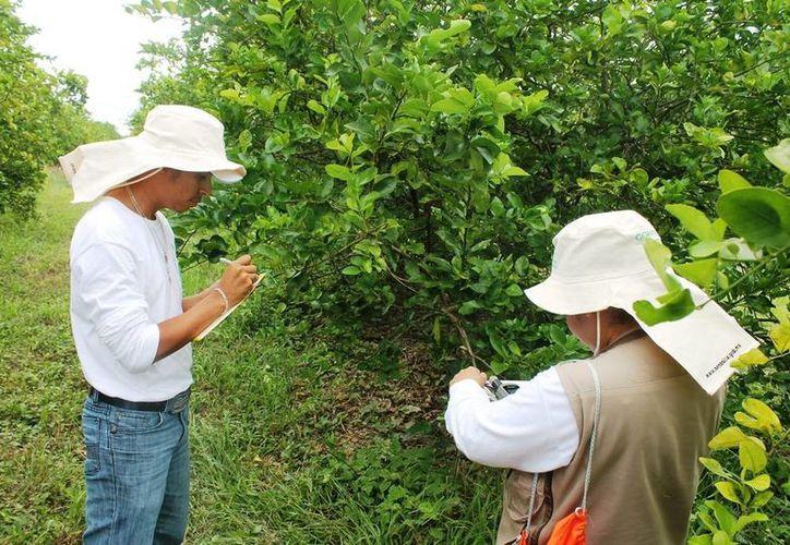 Con el fin de prevenir plagas y enfermedades en los cultivos y animales se estableció un cordón sanitario en la región peninsular. (Edgardo Rodríguez/SIPSE)
