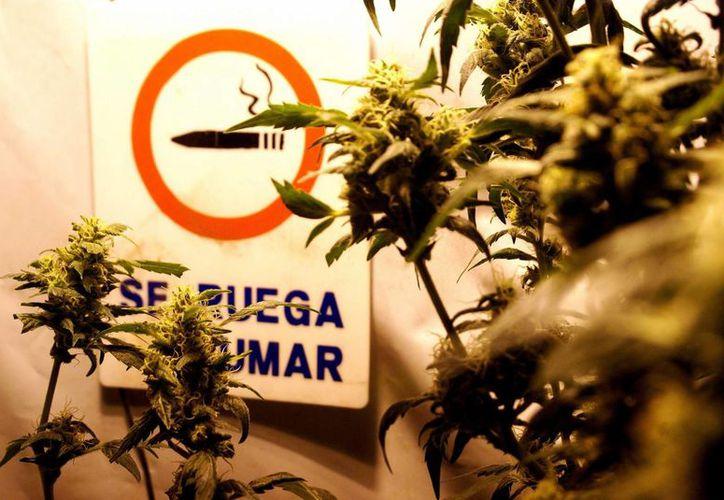 El presidente de Uruguay consideró que la vía represiva contra la droga fracasó. (EFE)