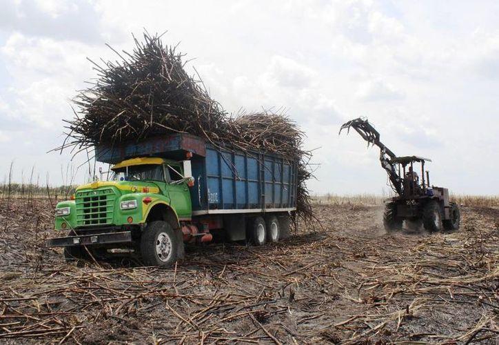 La tarde de ayer ya se encontraban cerca de 120 camiones de caña cargados. (Edgardo Rodríguez/SIPSE)