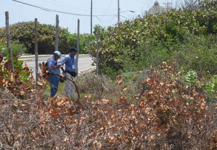 Los inspectores federales en el recorrido realizado a lo largo y ancho de la ínsula. (Lanrry Parra/SIPSE)