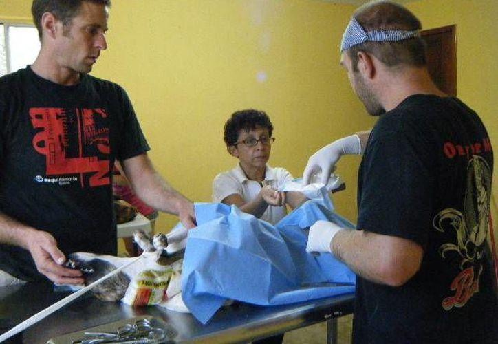 Veterinarios americanos, ingleses, noruegos y del estado de Yucatán se han unido a la causa. (Redacción/SIPSE)