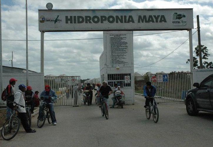 La empresa quintanarroense fue declarada en banca rota en 2012. (Edgardo Rodríguez/SIPSE)