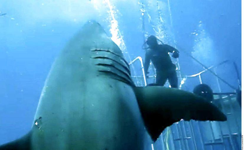 Cinco personas murieron el año pasado a causa de ataques de tiburones. (Archivo Agencia Reforma)