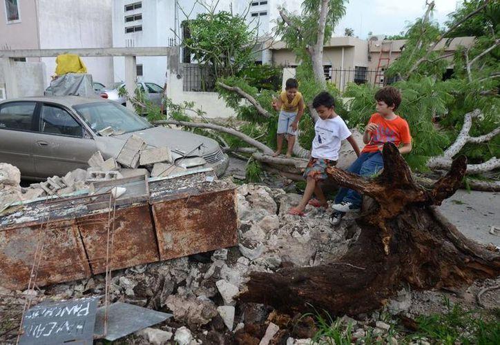 A causa de la turbonada, un árbol cayó sobre un vehículo estacionado en la calle 38-A entre 25 Diagonal y 27, en San Luis Chuburná. (José Acosta/SIPSE)