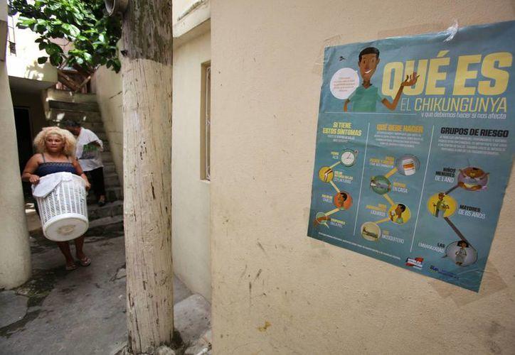 La Organización Panamericana de la Salud indicó que la región del Caribe registra el mayor número de pacientes infectados con el virus del chikungunya. (EFE/Archivo)