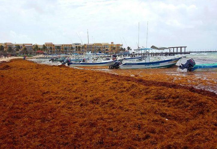 Marta García-Sánchez, especialista en Macroalgas dio una conferencia advirtiendo sobre el peligro de esta alga. (Foto: Daniel Pacheco/SIPSE).