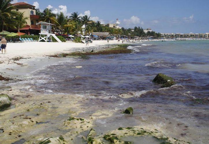 Mencionan que este fenómeno que se registra en la playa es natural. (Octavio Martínez/SIPSE)