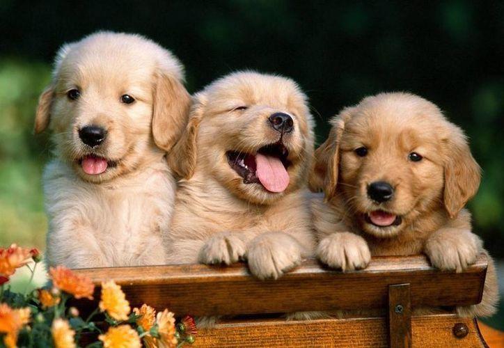 Las mascotas se podrán registrar a partir del 13 de mayo en diversos módulos de la ciudad. (Foto de Contexto/Internet)