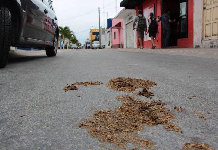 Comerciantes y vendedores del centro de la ciudad indicaron que el olor que despedía los residuos era bastante desagradable. (Gustavo Villegas/SIPSE)