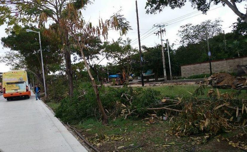 Según el Ayuntamiento, la poda de árboles es supervisada por biólogos preparados y realizada por jardineros experimentados que respetan plantas y árboles. (SIPSE)