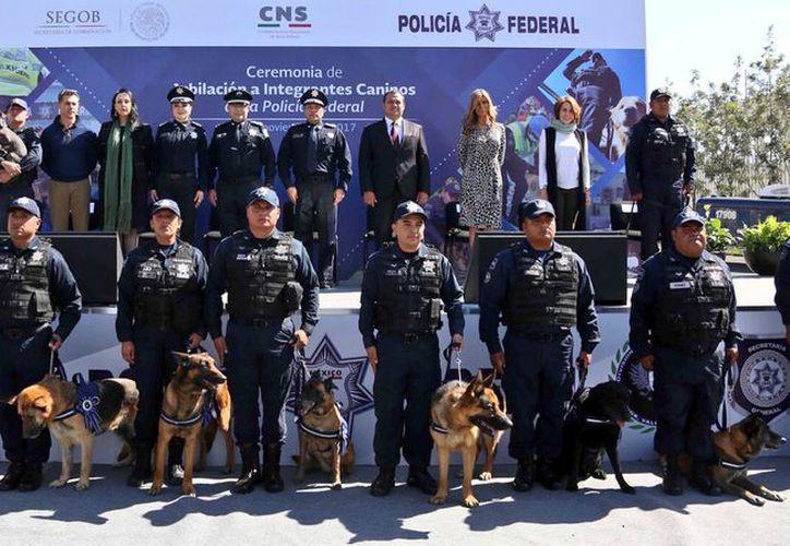Los perros fueron entrenados para la detección de narcóticos, restos humanos y sustancias explosivas. (Foto: Twitter)