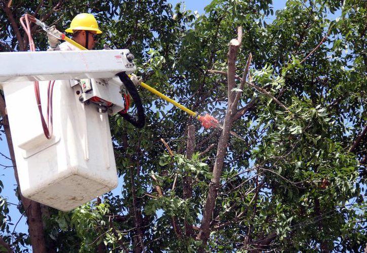 Los trabajadores realizan revisiones en líneas de suministro de energía y subestaciones. (Luis Soto/SIPSE)