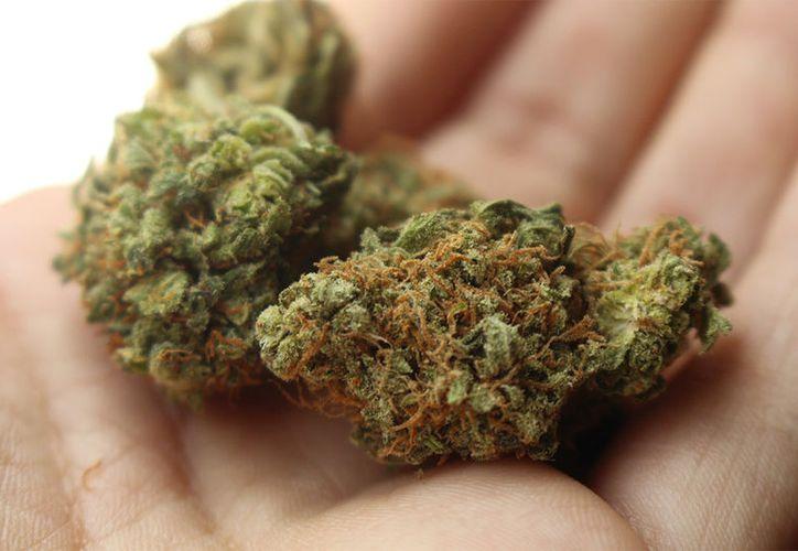 La Suprema Corte de Justicia de la Nación rechazó despenalizar la posesión simple de marihuana. (Pixabay)