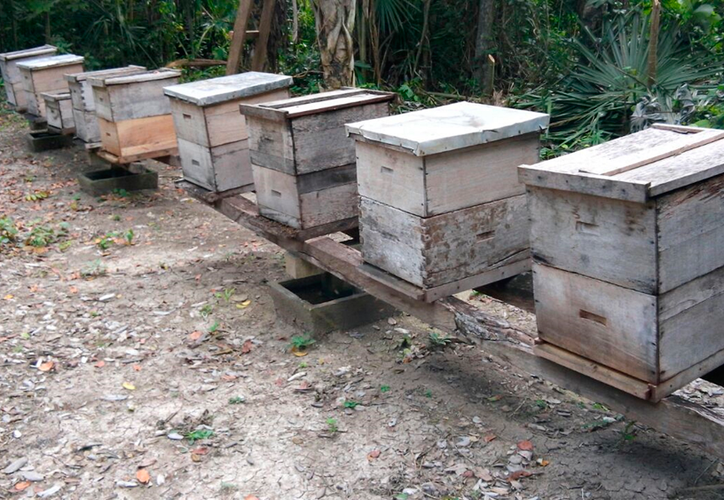 Las colmenas afectadas se encuentran en las poblaciones de Zaczuquil, Kankabchen, San Felipe 1 y Nueva Reforma. (Tony Blanco/SIPSE)