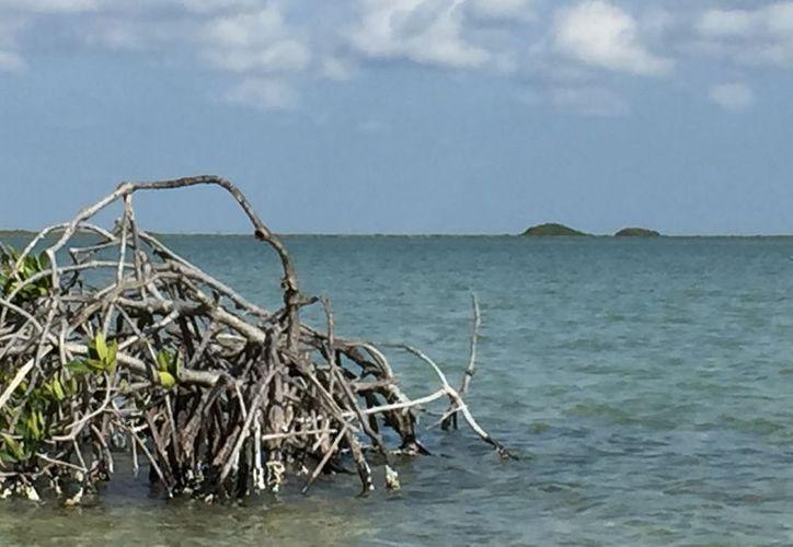 Concluyó el festival ambiental que inicio en Playa del Carmen y terminó en Tulum. (Sara Cauich/ SIPSE)