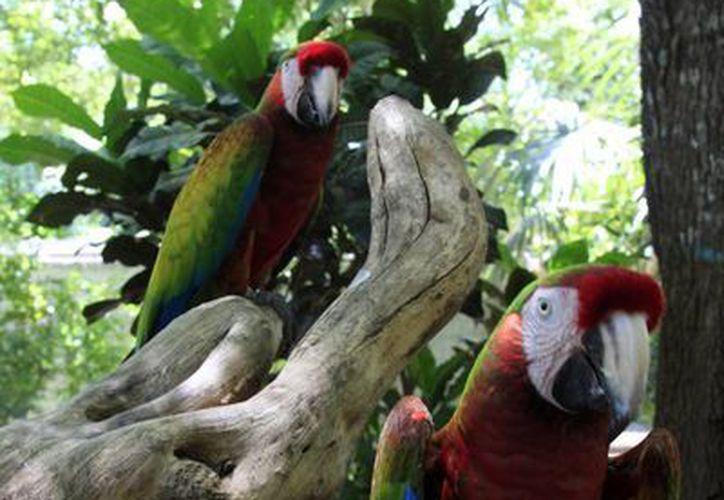 La Profepa aseguró que el Payo Obispo Zoo incumplió una serie de señalamientos realizados hace varios meses. (Harold Alcocer/SIPSE)