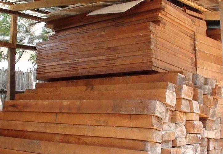 En Quintana Roo hay 12 mil productores que se dedican a la extracción de madera principalmente el Cedro y Caoba. (Foto de Contexto/Internet)