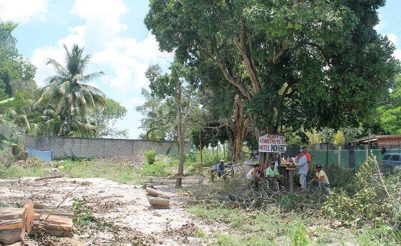 Los árboles se encontraban en un predio ubicado sobre la avenida tres con calle 28 de Bacalar. (Javier Ortiz/SIPSE)