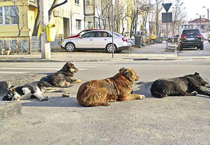 Dos personas fueron atacadas por perros el 29 de diciembre en calles de Iztapalapa y dos más el viernes de esta semana. (Foto de contexto)