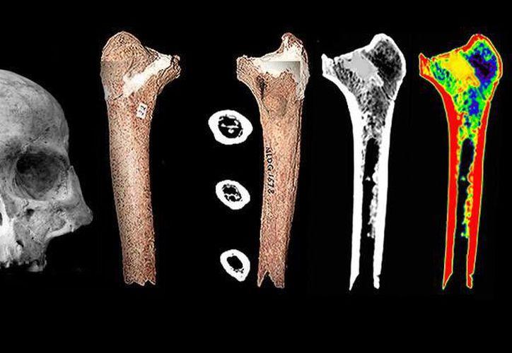 Un hueso que nunca fue estudiado permitió descubrir una nueva especie humana. (rt.com)