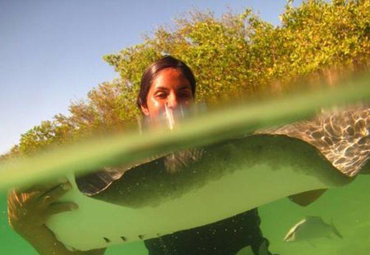 Los turistas podrán disfrutar de las bellezas de los cenotes. (Adrián Barreto/SIPSE)