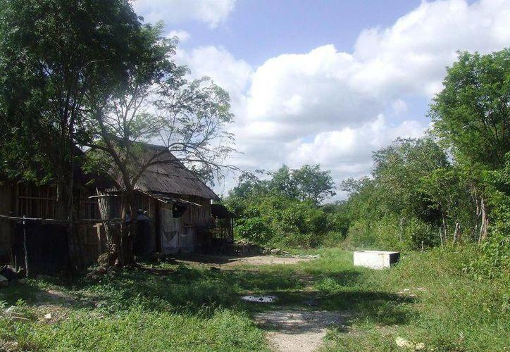 Los colonos de la localidad manifestaron que sufren de plagas constantemente. (Rossy López/SIPSE)