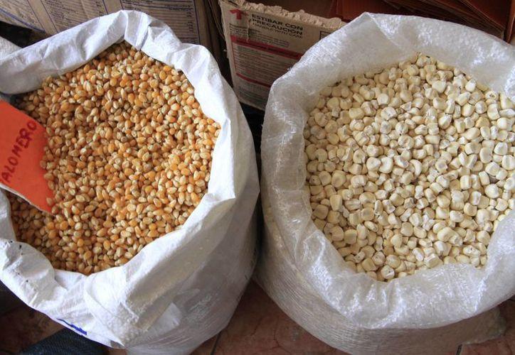 En México es fácil ingresar semillas mientras no sean amenazadas por plagas. (Tomás Álvarez/SIPSE)