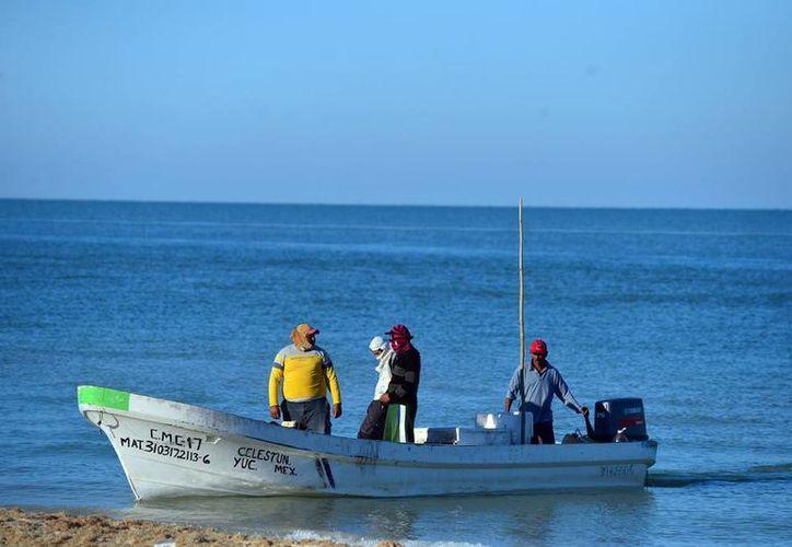 La pesca ilegal de pepino de mar no puede frenarse si no se controla la comercialización, asegura Cedepesca. (Archivo/Milenio Novedades)