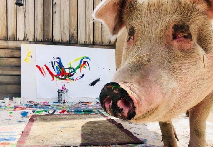 Ella es Pigcasso, la cerdita que pinta y vende cada cuadro en cerca de mil euros. (Instagram)
