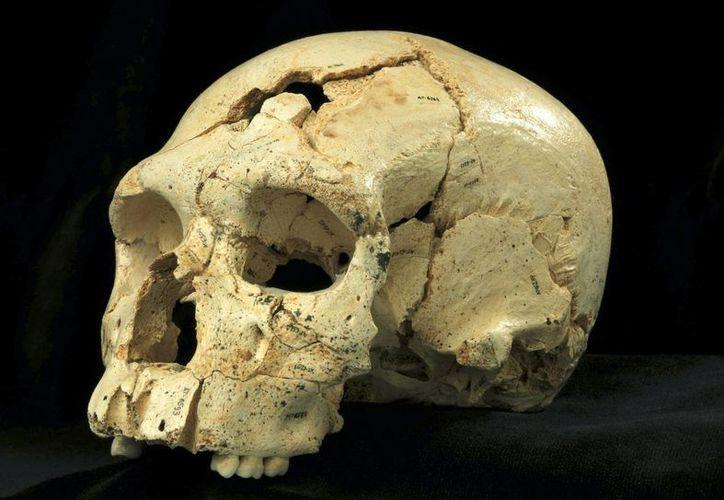 Fotografía facilitada por el Museo de la Evolución Humana de Atapuerca del cráneo número 17 de la Sima de los Huesos. (EFE)