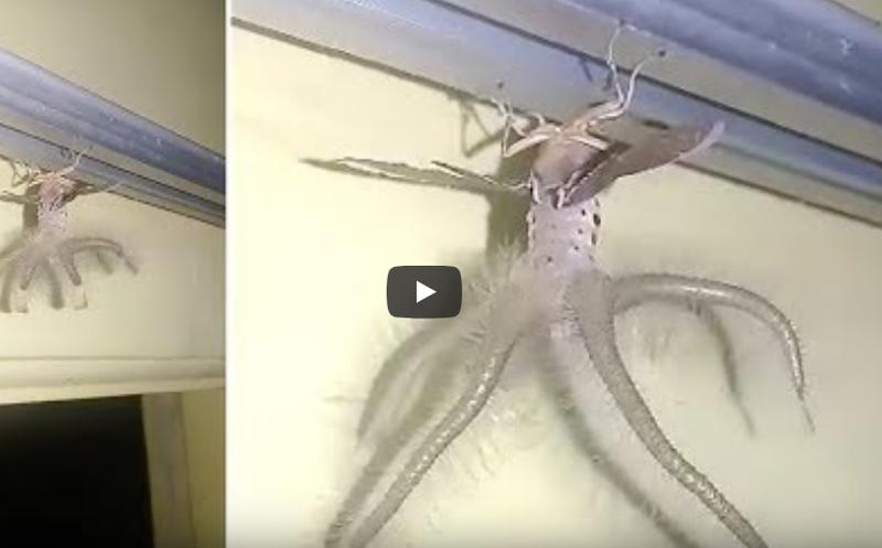 Capta extraña criatura de alas y tentáculos en su casa