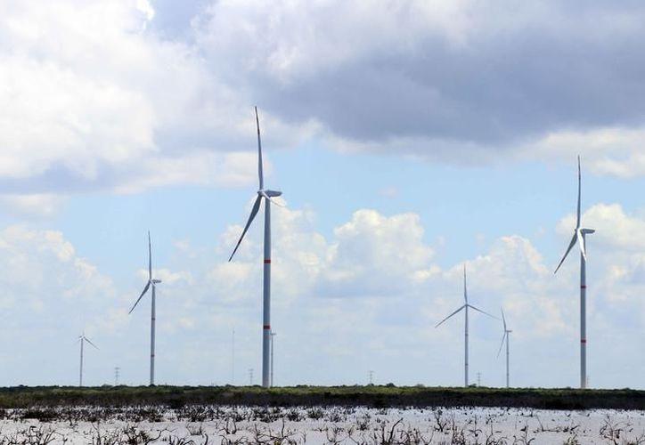 En la actualidad hay dos parques eólicos y unas granjas fotovoltaicas listas en el Estado. (Foto: Milenio Novedades)