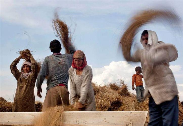 La agricultura será uno de los sectores más afectados por el cambio climático. (AP)