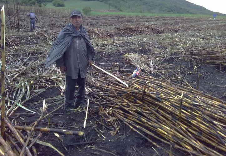 Los cortadores de caña fueron afectados por las recientes lluvias. (Carlos Castillo/SIPSE)