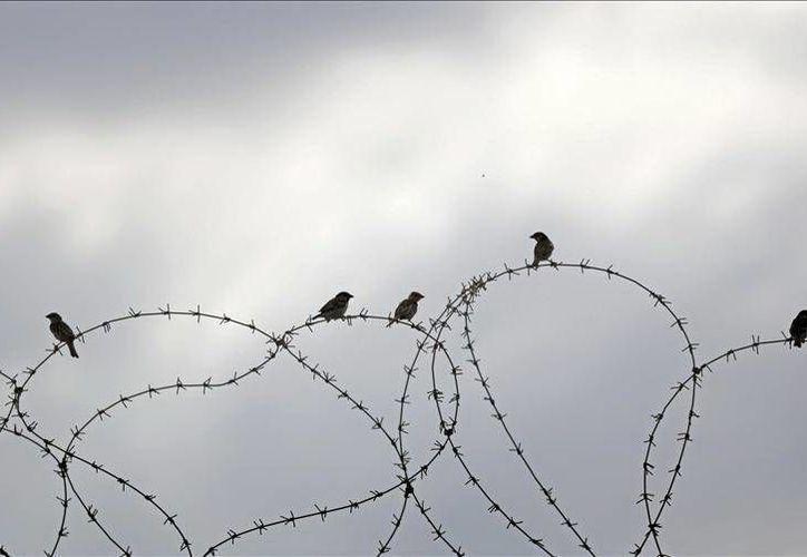 Pensaron que el palestino era sospechoso porque en el pasado muchos se acercaban a colocar explosivos en la frontera. (EFE)