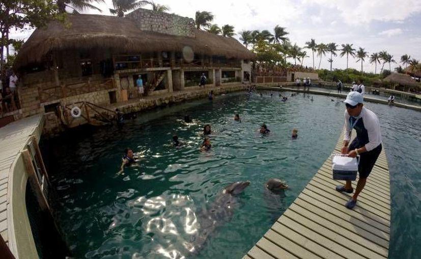 Quintana Roo concentra más de 50% de los delfinarios en el país. (Contexto/SIPSE)