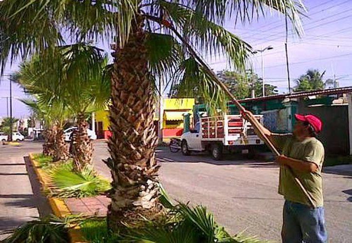 Realizan trabajos de jardinería desde la calle 27 hasta la Base Aérea Militar en Cozumel. (Redacción/SIPSE)
