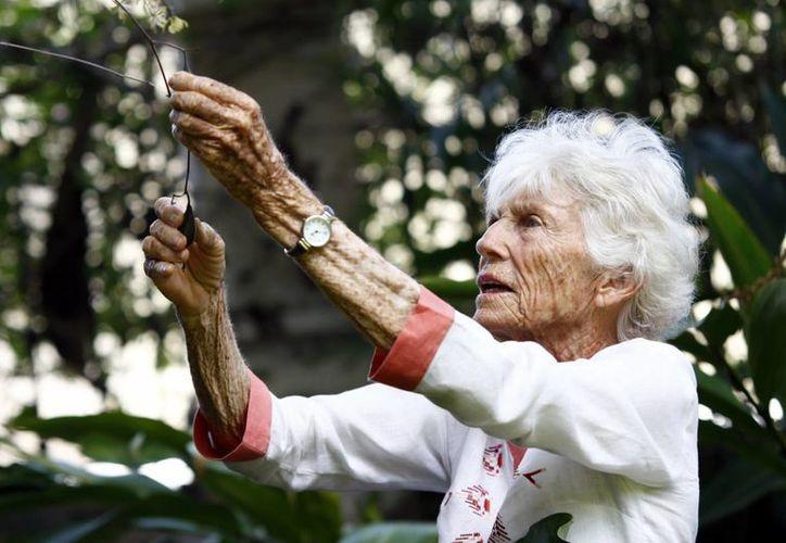 Joann M. Andrews es una apasionada de las orquídeas. (Christian Ayala/SIPSE)