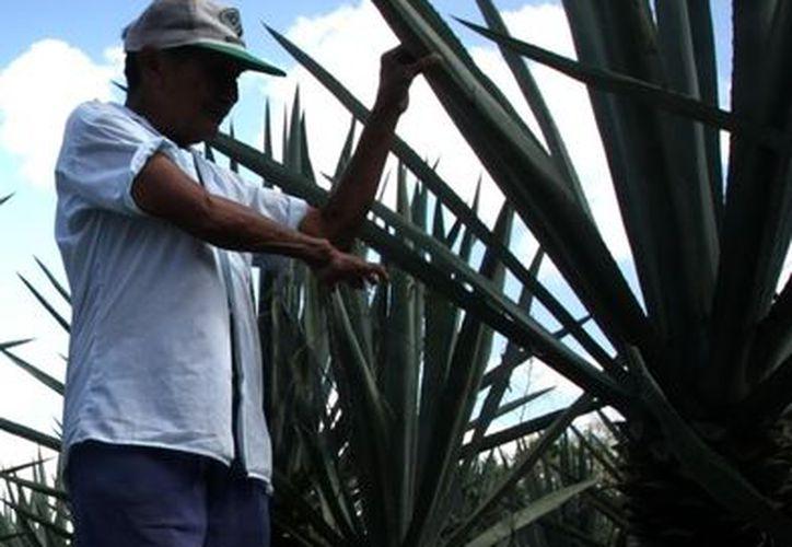 La fábrica de alfombras y tapetes contribuiría en muy poco a reactivar la producción henequenera de Yucatán. (Archivo/SIPSE)