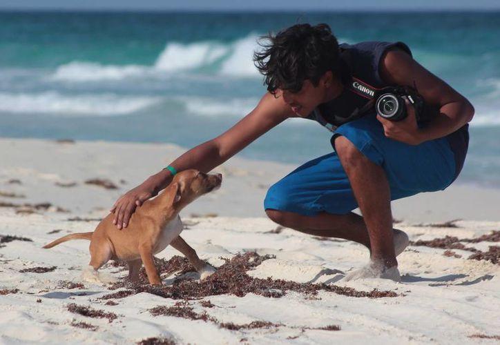 Si tuviste contacto con un animal con moquillo y luego tocas a otro sano, lo puedes contagiar. (Gustavo Villegas/SIPSE)