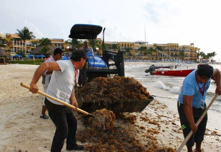Los integrantes de la cooperativa se unieron a los trabajadores de la Zofemat para retirar el sargazo de la costa del centro de Playa del Carmen.  (Juan Cano/SIPSE)