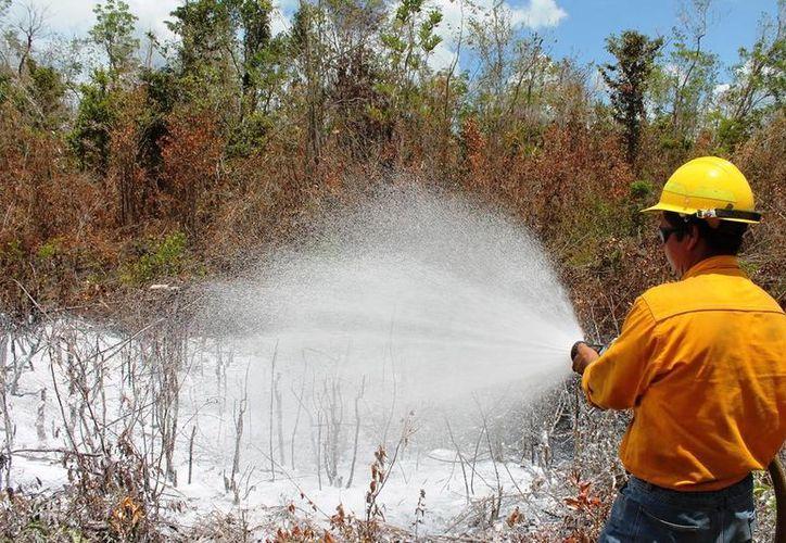 Según datos de la Cencif, Quintana Roo ha reportado tres conflagraciones con 15 hectáreas dañadas. (Edgardo Rodríguez/SIPSE)